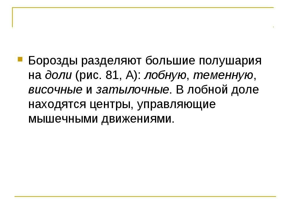 Борозды разделяют большие полушария на доли (рис. 81, А): лобную, теменную, в...