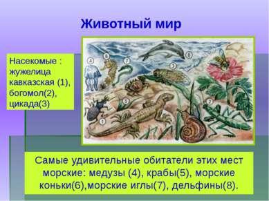 Самые удивительные обитатели этих мест морские: медузы (4), крабы(5), морские...