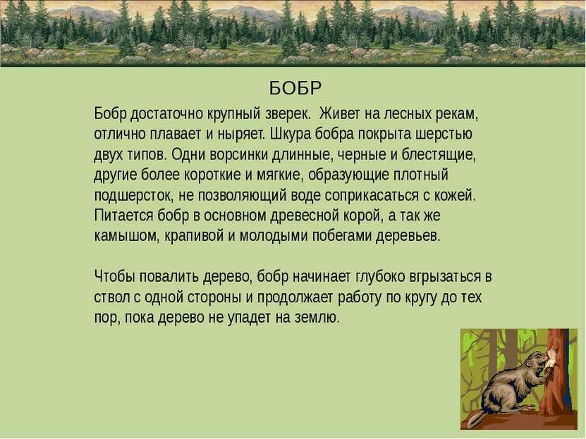 БОБР Бобр достаточно крупный зверек. Живет на лесных рекам, отлично плавает и...