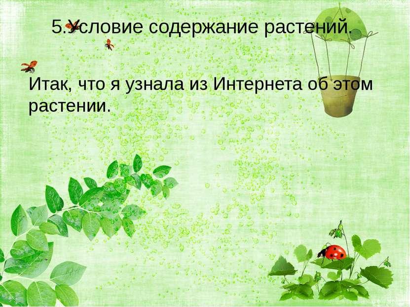 5.Условие содержание растений. Итак, что я узнала из Интернета об этом растении.