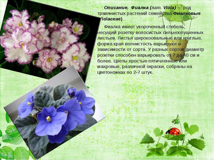 Описание. Фиалка (лат. Viola)— род травянистых растений семейства Фиалк...