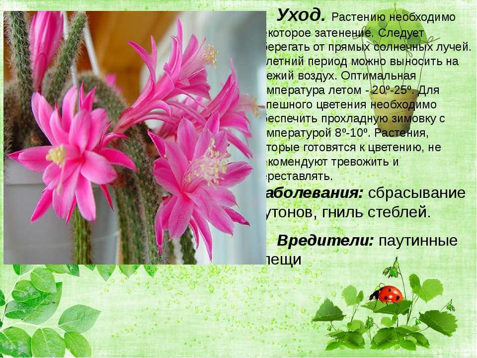 Уход. Растению необходимо некоторое затенение. Следует оберегать от прямых со...
