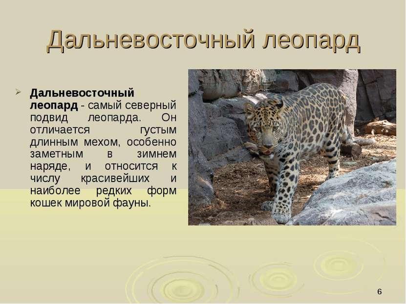 * Дальневосточный леопард Дальневосточный леопард - самый северный подвид лео...