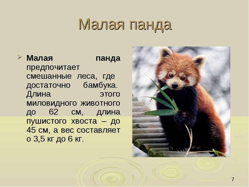 * Малая панда Малая панда предпочитает смешанные леса, где достаточно бамбука...