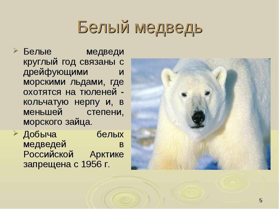 * Белый медведь Белые медведи круглый год связаны с дрейфующими и морскими ль...