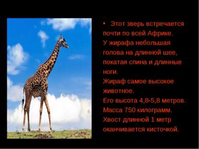 Этот зверь встречается почти по всей Африке. У жирафа небольшая голова на дли...