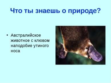 Что ты знаешь о природе? Австралийское животное с клювом наподобие утиного носа