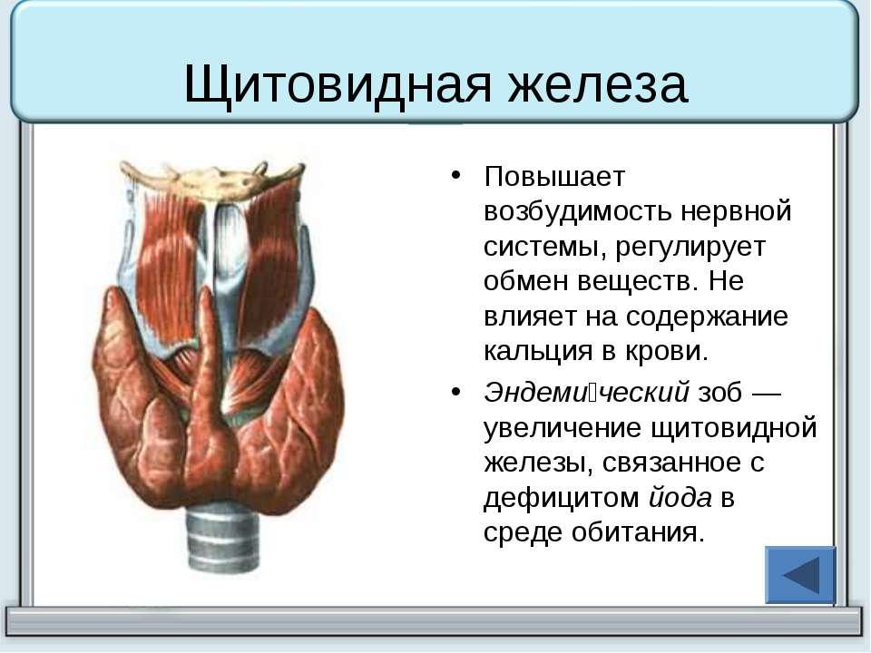Щитовидная железа  эндокринная система  анатомия