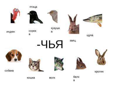 -ЧЬЯ индюк сорока кукушка птица щука собака кошка волк белка кролик заяц http...