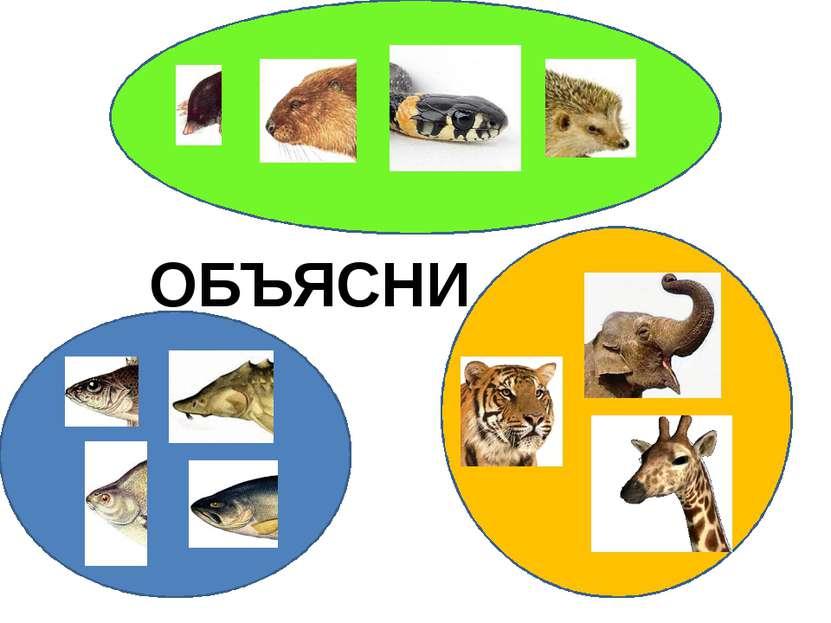 """ОБЪЯСНИ http://www.deti-66.ru/конкурс """"Мастер презентаций"""""""