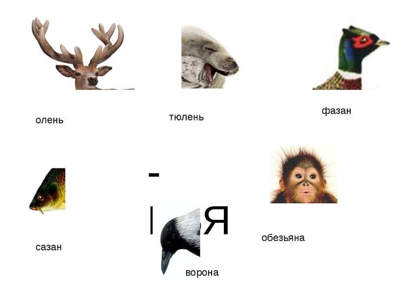 """-НЬЯ олень тюлень ворона фазан сазан обезьяна http://www.deti-66.ru/конкурс """"..."""