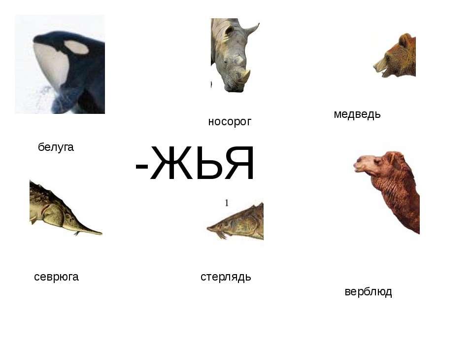 -ЖЬЯ медведь верблюд белуга севрюга стерлядь носорог http://www.deti-66.ru/ко...