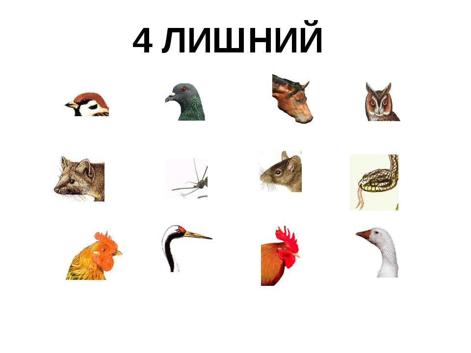 "4 ЛИШНИЙ http://www.deti-66.ru/конкурс ""Мастер презентаций"""