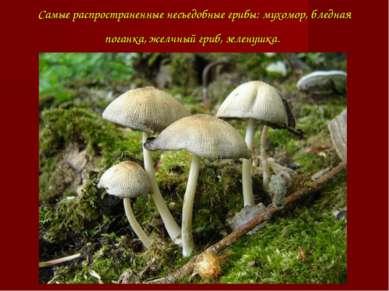 Самые распространенные несъедобные грибы: мухомор, бледная поганка, желчный г...