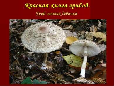Красная книга грибов. Гриб-зонтик девичий