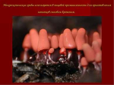 Микроскопические грибы используются в пищевой промышленности для приготовлени...