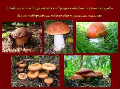 Наиболее часто встречаются следующие съедобные шляпочные грибы: белые, подбер...