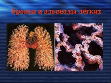 Бронхи и альвеолы лёгких