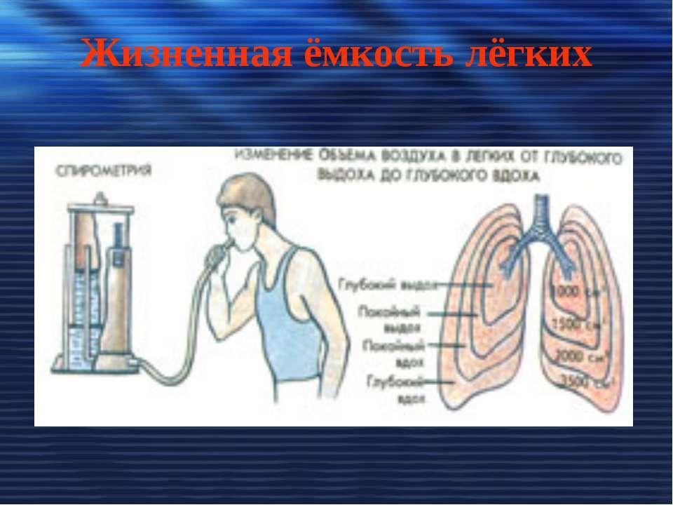 Жизненная ёмкость лёгких