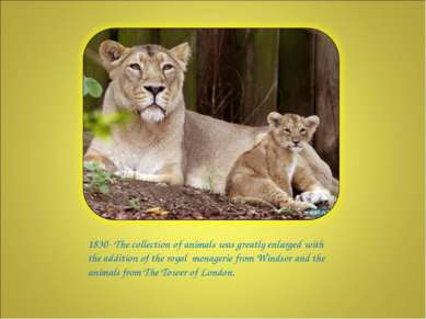 1830- The collection of animals was greatly enlarged with the addition of the...