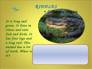 It is long and green. It lives in rivers and eats fish and birds. It has four...