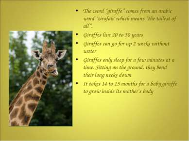 "The word ""giraffe"" comes from an arabic word 'zirafah' which means ""the talle..."