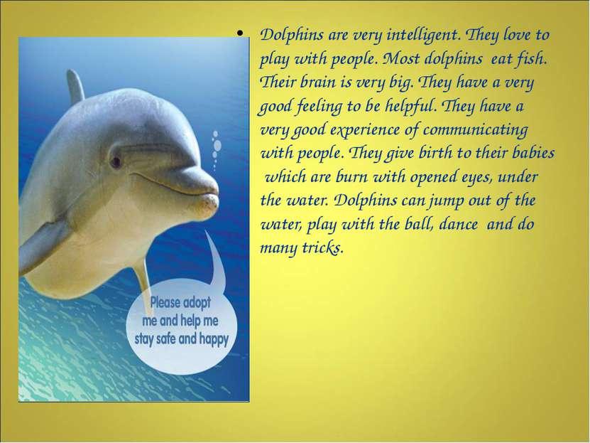 Dolphins are very intelligent. They love to play with people. Most dolphins e...