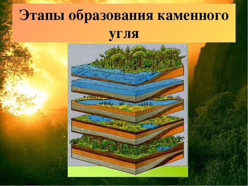 Этапы образования каменного угля