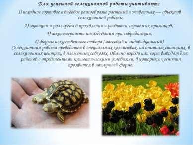 Для успешной селекционной работы учитывают: 1) исходное сортовое и видовое ра...