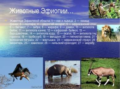 Животные Эфиопии… Животные Эфиопской области: 1 —лев и львица; 2 — лисица фен...