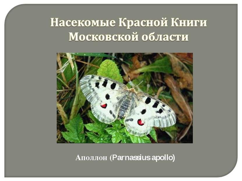 Аполлон (Parnassius apollo)