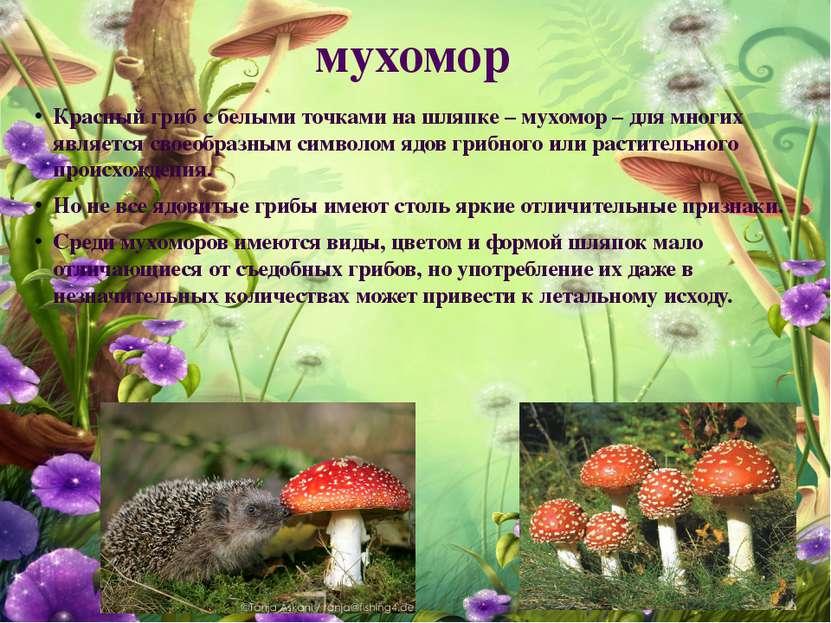 мухомор Красный гриб с белыми точками на шляпке – мухомор – для многих являет...
