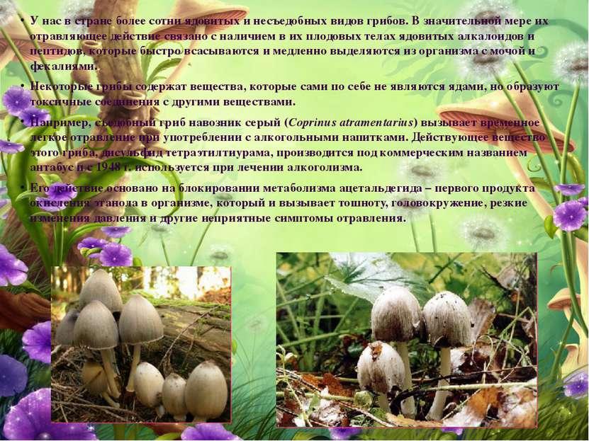 У нас в стране более сотни ядовитых и несъедобных видов грибов. В значительно...
