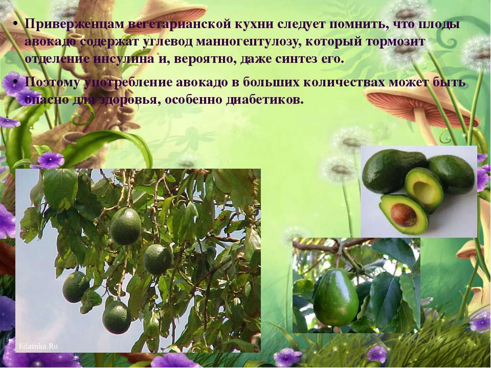 Приверженцам вегетарианской кухни следует помнить, что плоды авокадо содержат...