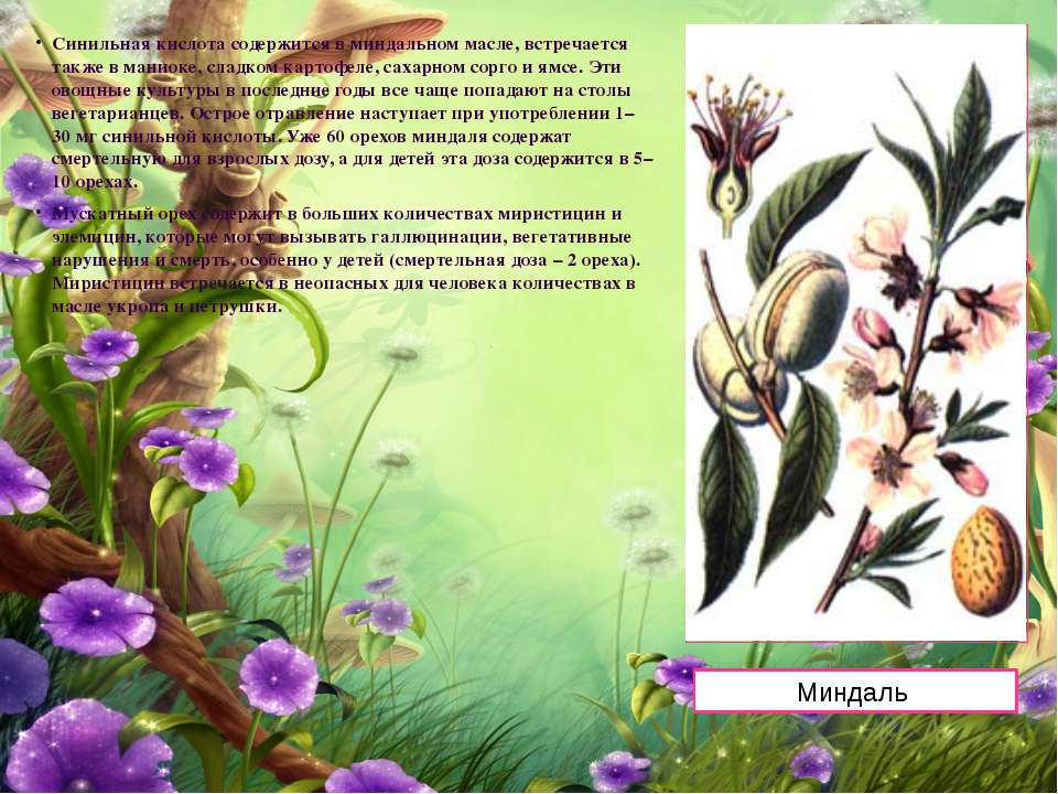 Синильная кислота содержится в миндальном масле, встречается также в маниоке,...