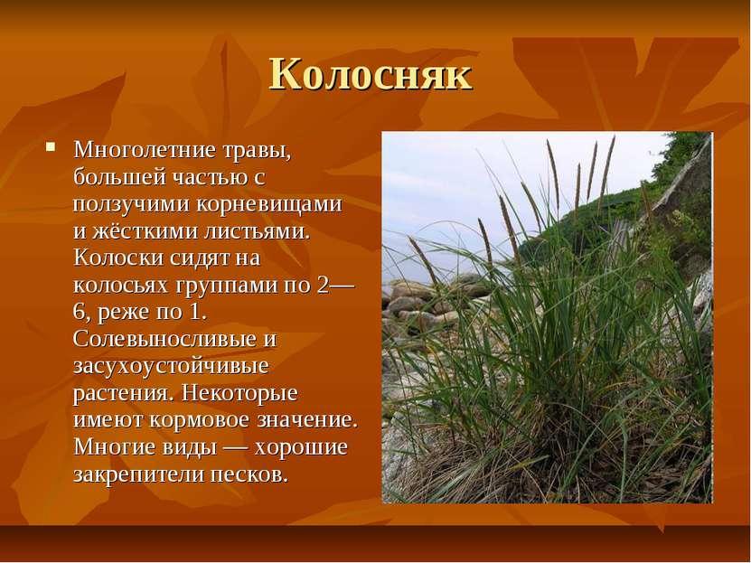 Колосняк Многолетние травы, большей частью с ползучими корневищами и жёсткими...