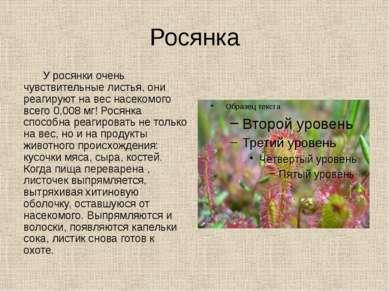 Росянка У росянки очень чувствительные листья, они реагируют на вес насекомог...