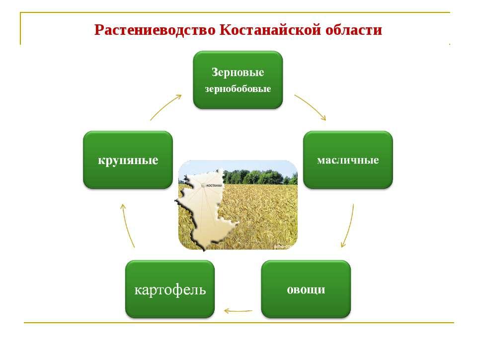 Растениеводство Костанайской области