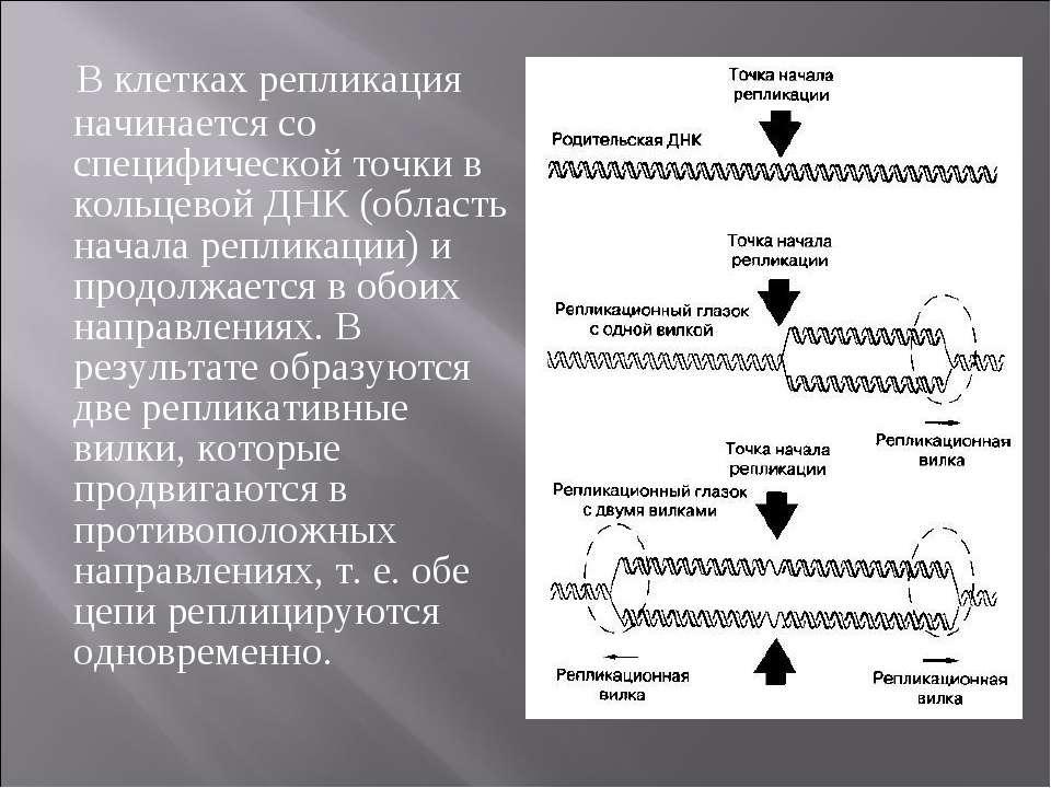 В клеткаx репликация начинается со специфической точки в кольцевой ДНК (облас...