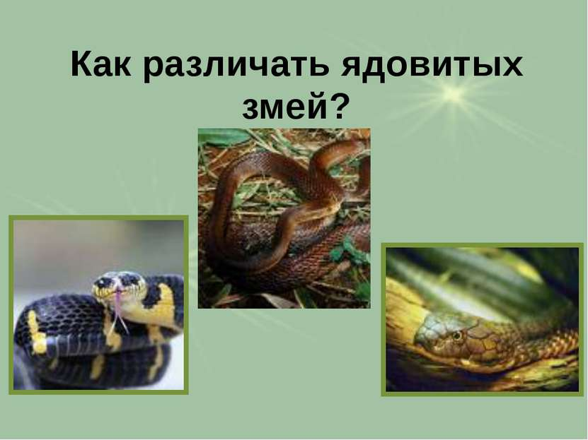 Как различать ядовитых змей?