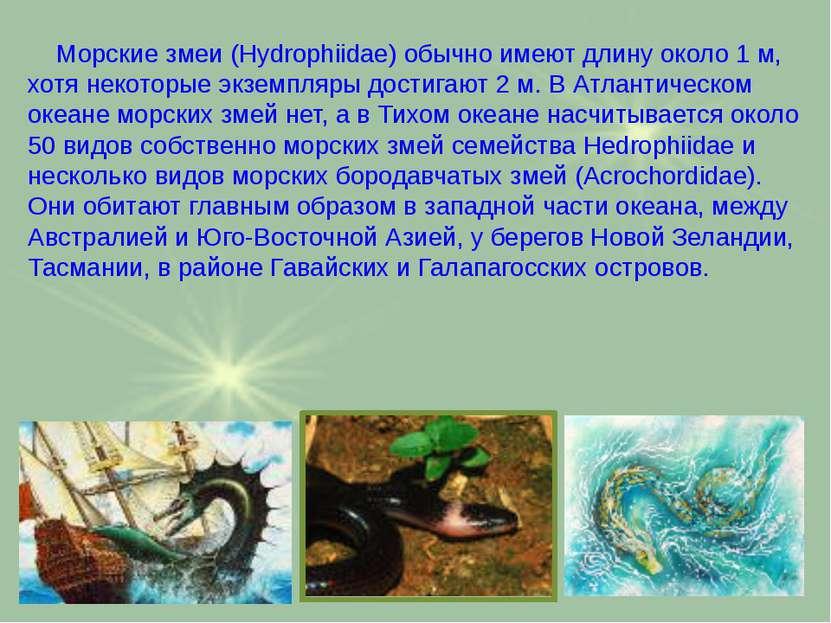 Морские змеи (Hydrophiidae) обычно имеют длину около 1 м, хотя некоторые экзе...