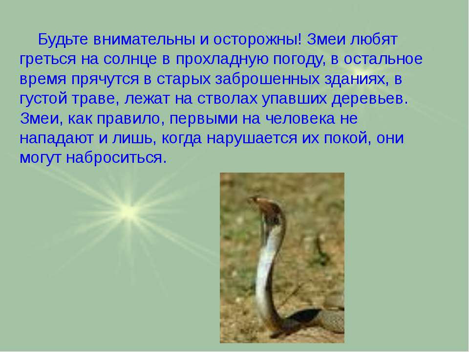 Будьте внимательны и осторожны! Змеи любят греться на солнце в прохладную пог...