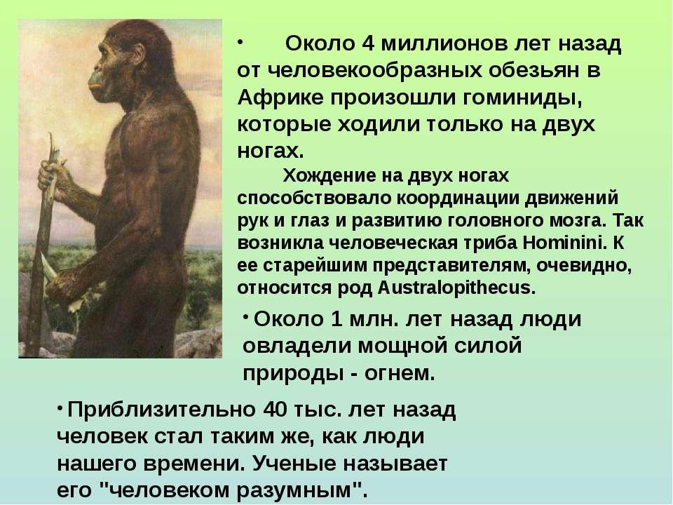 Около 4 миллионов лет назад от человекообразных обезьян в Африке произошли го...