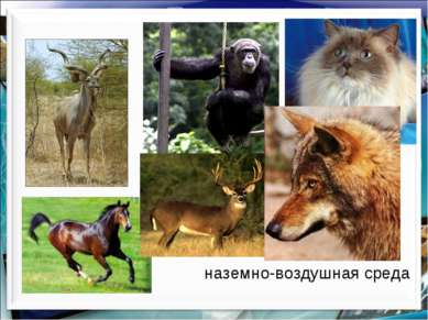наземно-воздушная среда http://aida.ucoz.ru