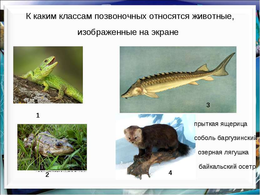 К каким классам позвоночных относятся животные, изображенные на экране озерна...