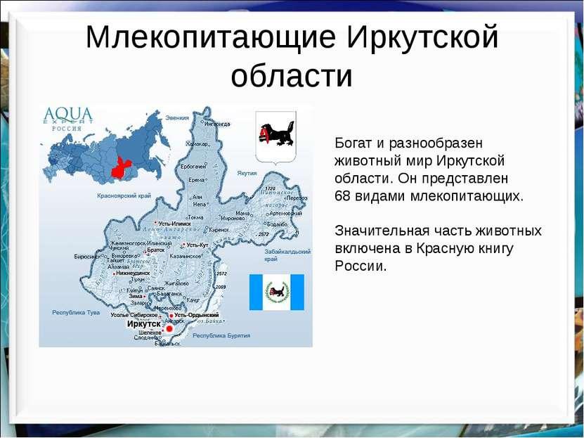 Млекопитающие Иркутской области Богат и разнообразен животный мир Иркутской о...