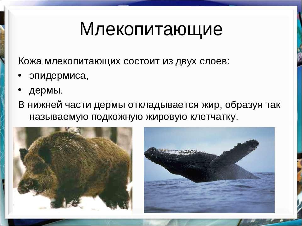 Млекопитающие Кожа млекопитающих состоит из двух слоев: эпидермиса, дермы. В ...