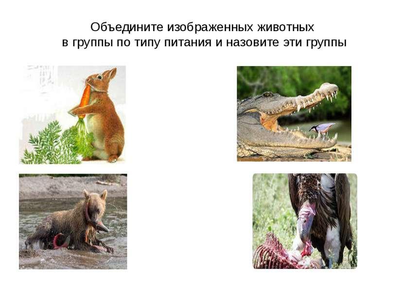 Объедините изображенных животных в группы по типу питания и назовите эти группы