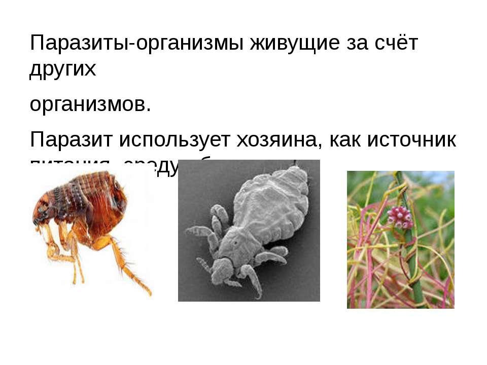 Паразиты-организмы живущие за счёт других организмов. Паразит использует хозя...
