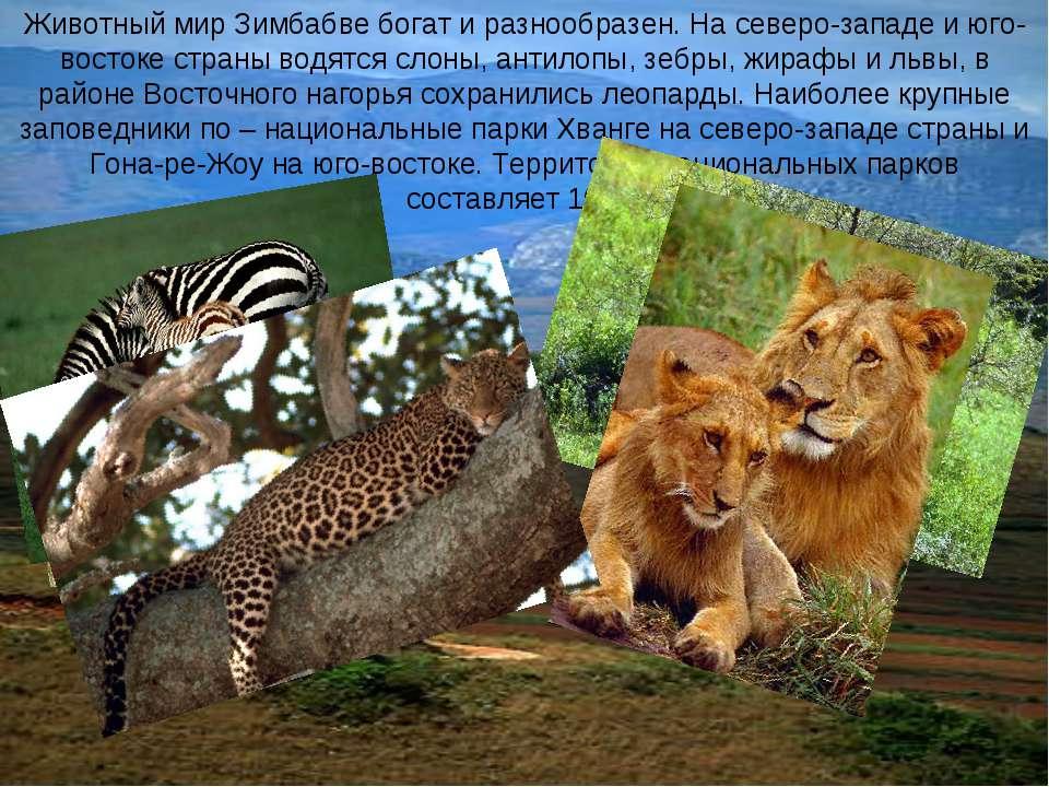 Животный мир Зимбабве богат и разнообразен. На северо-западе и юго-востоке ст...